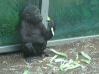 Zoo de Munich